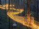 Tennessee Treetop Skywalk is the Longest Tree-Based Bridge in North America!