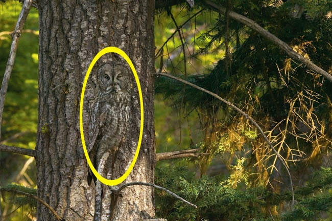 20 Hidden Owls That Won't Be Easy To Spot