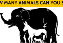 5 Hidden Animal Puzzles Most People Can't Solve